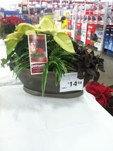 Photo: This was on a table near the entry to the store ~ I love this! The poinsettia mixed with houseplants for a year round display.