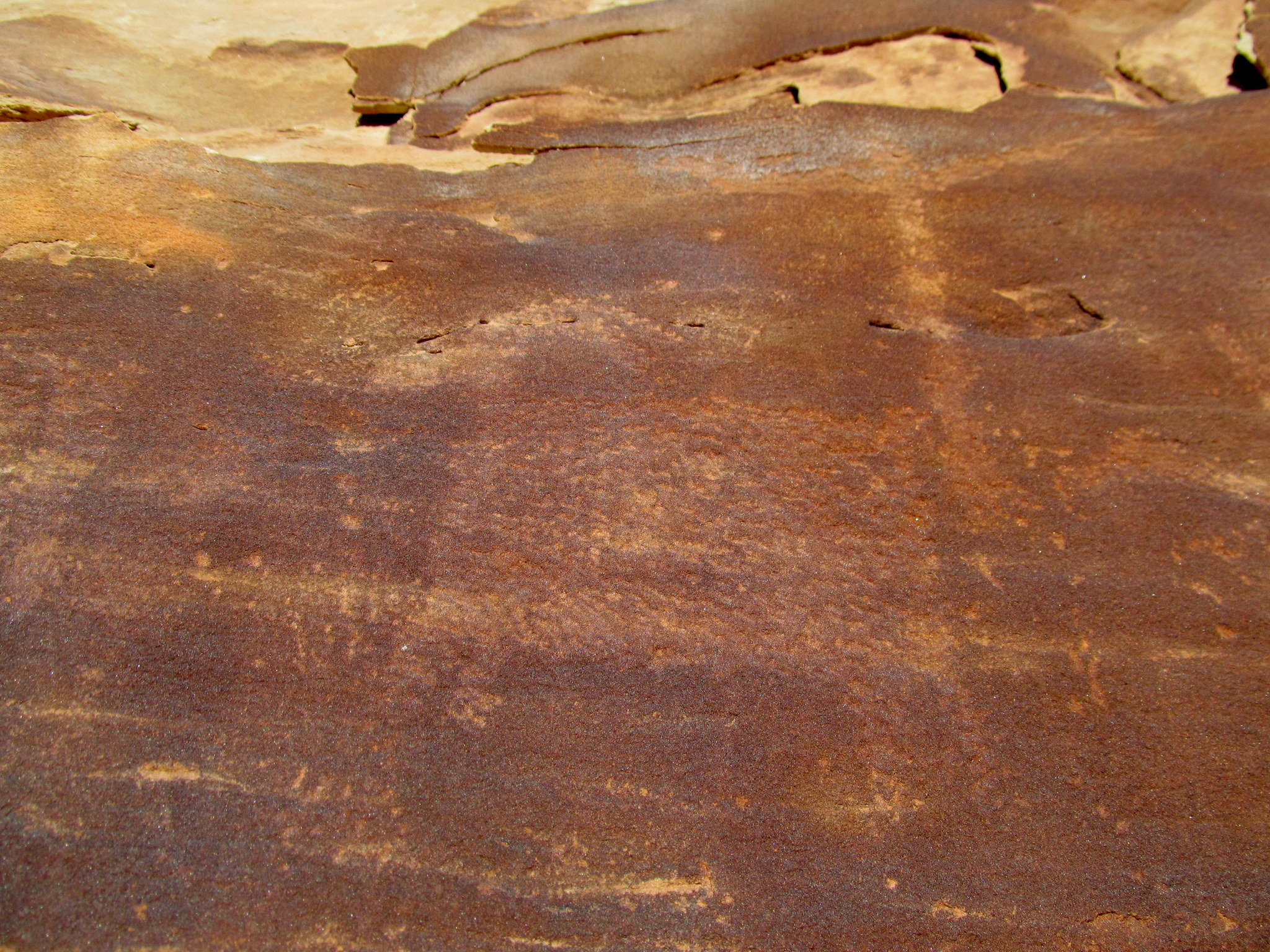 Photo: Faint bighorn sheep petroglyph
