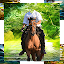 Horse With Man Photo Suit 2020 icon