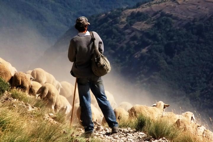 Il pastore serafino di auraamato16
