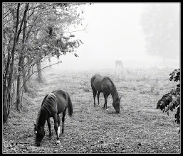 Photo: 3 horses  My contribution to: #EquineTuesday curated by +Jillian Chilson  #art #fineart #CritiquePls curated +Karin Nelson #PlusPhotoExtract curator +Jarek Klimek #FineArtPls curated by +Marina Chen