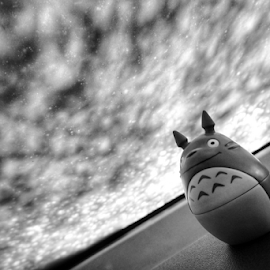 Totoro  by Todd Reynolds - Black & White Objects & Still Life