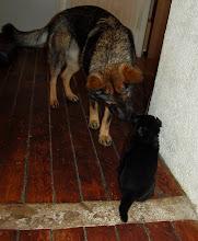 Photo: Ayla og sort jente 3 uker og 6 dager