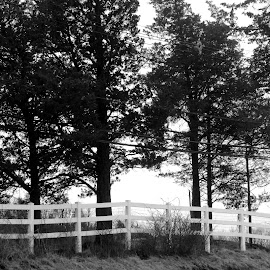 White Fence by Peggy LaFlesh - Black & White Landscapes ( fence, trees,  )