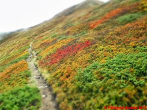 Photo: IMG_4082 i colori dell autunno sull appennino reggiano sulo 00 MINIATURA