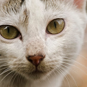 d by Aritra De - Animals - Cats Portraits