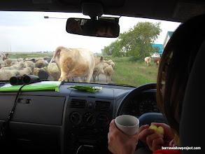 Photo: Traffic jam in Karasuk