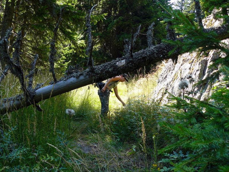 В родопската гора