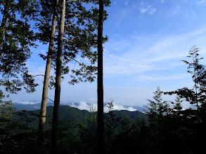 伐採地の展望地