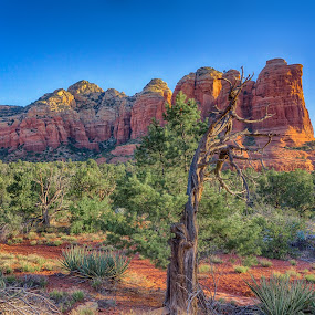 Sedona, Arizona by Charlie Alolkoy - Landscapes Caves & Formations ( rock, tree, sedona, formation, desert )