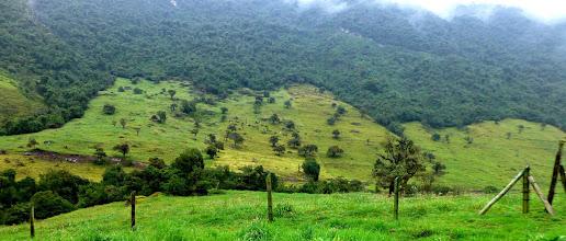 Photo: Cattle graze on hillside along trail above Termas Papallacta