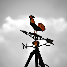 Rooster by Andy Bigelow - Artistic Objects Antiques ( #antiques, #stormcoming, #weather, #rooster, #blackandwhite )
