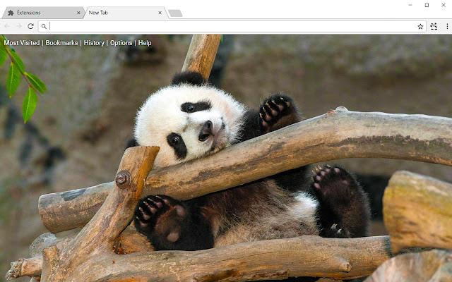 Pandas HD Wallpapers Panda New Tab Theme