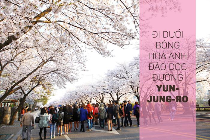 Thưởng thức mùa xuân Hàn Quốc 2