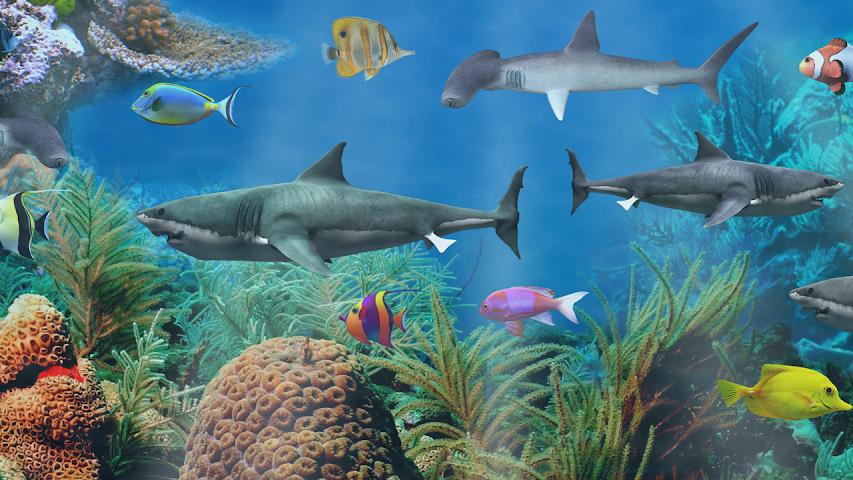 shark aquarium live wallpaper - photo #7