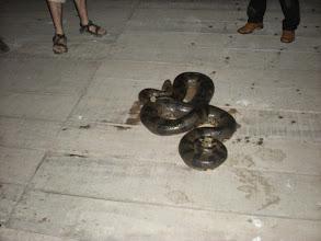 Photo: Anaconda