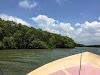 Sri. Lanka Wilpattu National Park . Mangroves along the backwaters