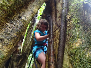 Photo: Charlotte half way up the tree. She aborted soon after this photo was taken, but she did get pretty far!