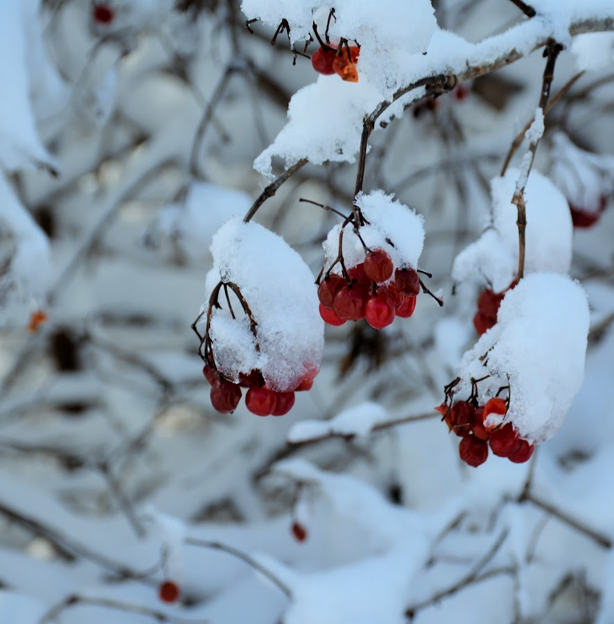 Between seasons by Beth Bowman - Nature Up Close Trees & Bushes (  )