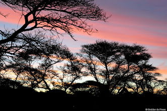 Photo: Sunset at Motswedi Camp Site in the Mokala National Park