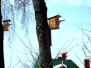 Photo: Ждут весны.