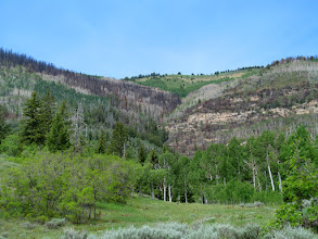 Photo: Burn area on Lowry Top