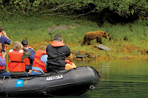 bear-Kelp-Bay-Alaska.jpg - A brown bear pays little heed to visitors during a Lindblad Expeditions visit to Kelp Bay, Alaska.