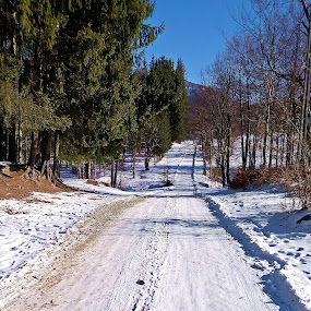 The road by Bogdan Ene - Landscapes Mountains & Hills ( winter, nature, snow, romania, road )