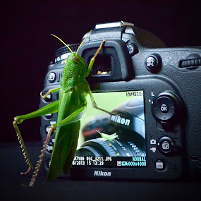 one two three...! cheers... by Casper Prie - Animals Insects & Spiders