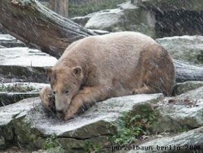 Photo: Knut schaut dem Schneetreiben zu ;-)