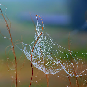 Morning Web by William Schmid - Nature Up Close Webs