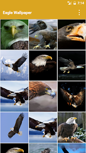 Eagle Wallpapers for PC-Windows 7,8,10 and Mac apk screenshot 1
