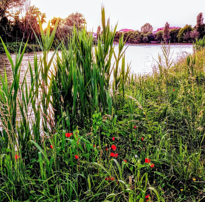 Serata sul fiume di NonnoGiú