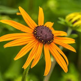 by Eseker RI - Flowers Flowers in the Wild