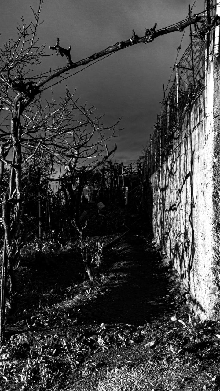 Mi ritrovai per una selva oscura, dove la diritta via era smarrita... di Ruben Giordano