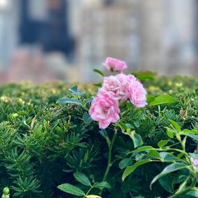 High by Lope Piamonte Jr - Flowers Flower Gardens