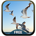 Sea Gulls Theme icon
