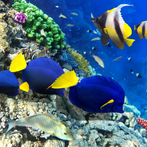 Download red sea fish live wallpaper for pc for Red sea fish