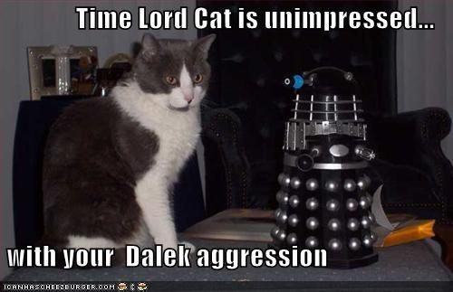 Photo: Meow! +Caturday #Caturday #DoctorWho  Y #twt