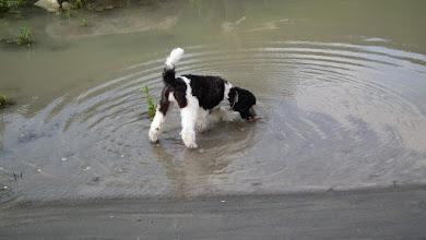 Photo: Sie bringt das Hölzchen immer und immer wieder aus dem Wasser.