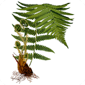 Fern Species Android APK Download Free By Kirill Sidorov