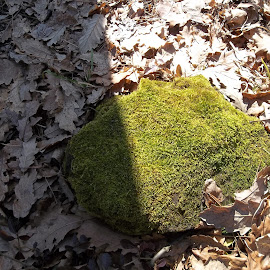 Време by Georgi Kolev - Nature Up Close Leaves & Grasses ( гора., слънце., камък., мъх., ден., листа., сенки., време. )