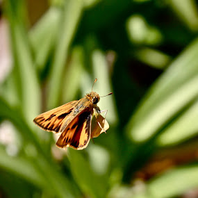 Float by Zoë Jackson - Animals Insects & Spiders ( butterfly, macro, upclose, leaf, moth )