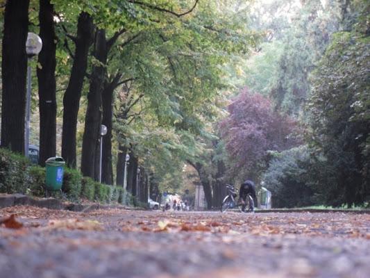 Sentieri Alberati di sidney_86