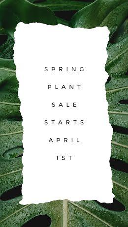 Spring Plant Sale - Instagram Story item