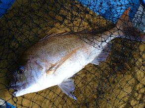 Photo: ドドーン!男前の真鯛! 真っ黒のゴツイ顔です!4kgでしょうかね!