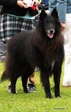 Photo: Wystawa Światowa 2010 (World Dog Show 2010)