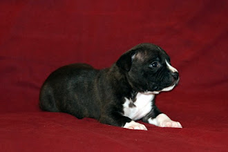 Photo: Mia Albachiara Arabesque Stellare (F)