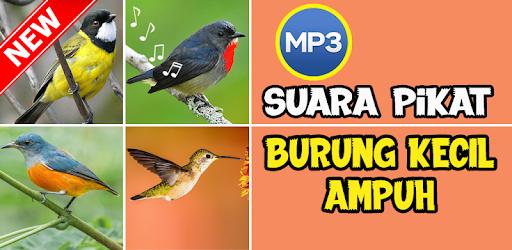Suara Pikat Burung Kecil Ampuh By Nafisa Edukasi More Detailed Information Than App Store Google Play By Appgrooves Music Audio 10 Similar Apps 12 Reviews