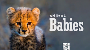Animal Babies thumbnail